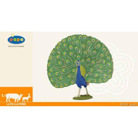 Paon - Animal de la ferme